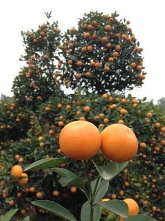Mandarin Garden (resized)